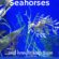10 Facts About Seahorses ….. and how to help them